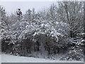 TF0820 : Winter wonderland by Bob Harvey