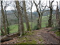 ST3697 : Woodland track off Llangibby Castle site by Jeremy Bolwell