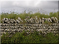SX0588 : Stone wall, near Tintagel by JEZ NORGAN
