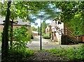 SD5320 : Sunlight through the trees by Ann Cook