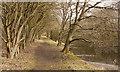 SJ5986 : A pleasant walk alongside the Runcorn and Latchford canal by Ian Greig