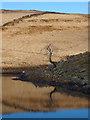 NY4803 : Solitary tree at Skeggles Water by Karl and Ali