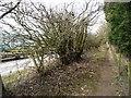 SE3440 : Footpath to Brandon Lane by Christine Johnstone
