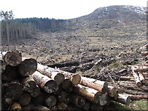 J3629 : Cut-over forest on the slopes of Slievenamaddy by Eric Jones