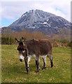 B9019 : Donkey, Dunlewey by Rossographer