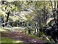SX4672 : The tranquil Tavistock Canal by Richard Green
