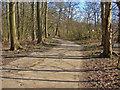 SU9369 : Access road, Lower Farm by Alan Hunt