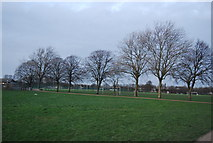 TQ7668 : Line of trees, Great Heritage Park by N Chadwick