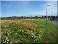NT6778 : East Lothian Townscape : Wildflower Meadow Near Hallhill Sports Centre, Dunbar by Richard West