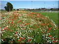 NT6778 : East Lothian Townscape : Wildflower Meadow Near Hallhill Playing Fields by Richard West