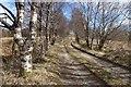NN2126 : A silver birch avenue leads to Succoth Lodge by Alan Reid
