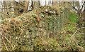 J4682 : Wall, Crawfordsburn/Helen's Bay (2) by Albert Bridge