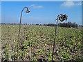 TA3203 : Gone to seed by Steve  Fareham
