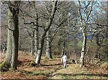 NH5857 : Enjoying Drummondreach Wood by Julian Paren