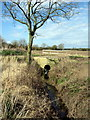 SP9824 : Stream flowing to Ouzel Brook by Philip Jeffrey