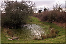 SP9623 : Pond in the paddock by Philip Jeffrey