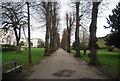 TR1457 : Tree lined path, Dane John by N Chadwick