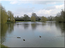 SU8083 : River Thames looking downstream south of Medmenham by Stuart Logan
