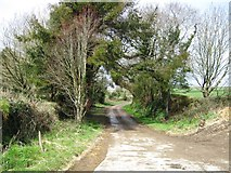 SX1553 : Access road, Polveithan Farm by Alex McGregor
