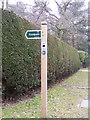 TM4770 : Sandlings Walk footpath sign by Adrian Cable