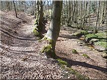 TQ4532 : Path alongside Tabell Ghyll by Marathon