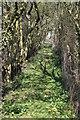 TF0671 : Public Footpath off Ferry Road by J.Hannan-Briggs