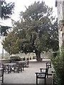 NZ1818 : Headlam Hall terrace by Stanley Howe