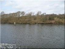 SJ6889 : Manchester Ship Canal navigation beacon by Christine Johnstone