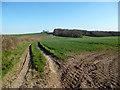 SU8490 : Fields off Ragmans Lane by Des Blenkinsopp