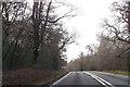 SU2913 : A337 through Rockram Wood by John Firth