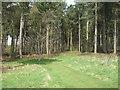 TL8426 : Entrance to conifer woodland, Marks Hall Estate by Roger Jones