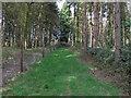TL8326 : Deer fence, Marks Hall Estate by Roger Jones
