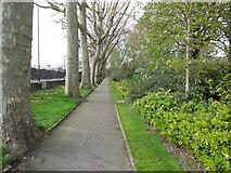 TQ2782 : Tree Lined Path - St John's Wood by Paul Gillett