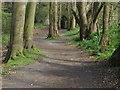 SU9069 : Sandy Lane, Burleigh by Alan Hunt