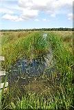 TG3504 : Marsh dyke, Buckenham by Jeremy Halls