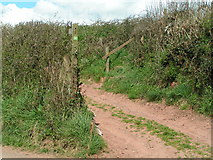 SS7401 : Two Moors way footpath leaving the lane by Rob Purvis