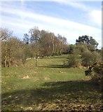 NZ1465 : Woodland near Tyneside Golf Course by JThomas