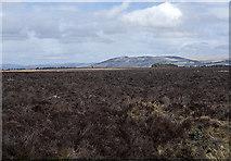 NN8812 : Moorland north of Whitehills by William Starkey