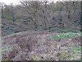 TL7807 : Heather Hills Nature Reserve, Little Baddow by Roger Jones