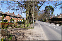 SU6466 : Reading Road - Burghfield Common by Given Up