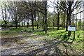 SP8424 : Cublington Spinney by Philip Jeffrey