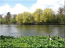 TQ1773 : The River Thames near Richmond by David Purchase
