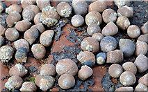 J4080 : Shells, Cultra by Albert Bridge
