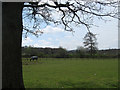 TQ1616 : Old Furze Field by Simon Carey