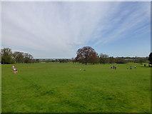 TL6804 : Hylands Park by PAUL FARMER