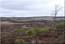 NU0702 : Looking north over the moors by Russel Wills