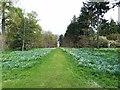 SE2585 : Main Avenue, Thorp Perrow Arboretum by Oliver Dixon