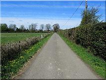 TQ8115 : Lane leading towards the A28 by Chris Heaton