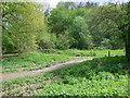 TQ2449 : Woods near Priory Pond by Paul Gillett