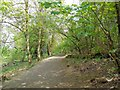 TQ2449 : Woods South of Priory Pond by Paul Gillett